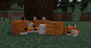 minecraft_foxes